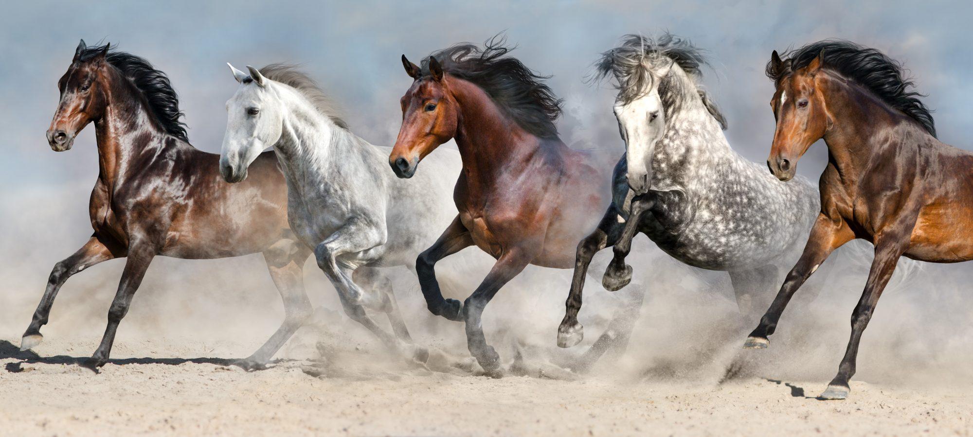 Hästmassage